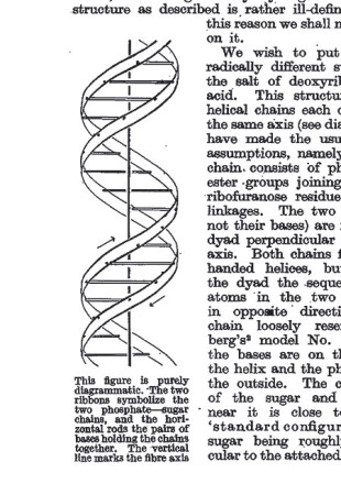 Odile Crick's original drawing of the double helix, as printed in the journal Nature in 1953.