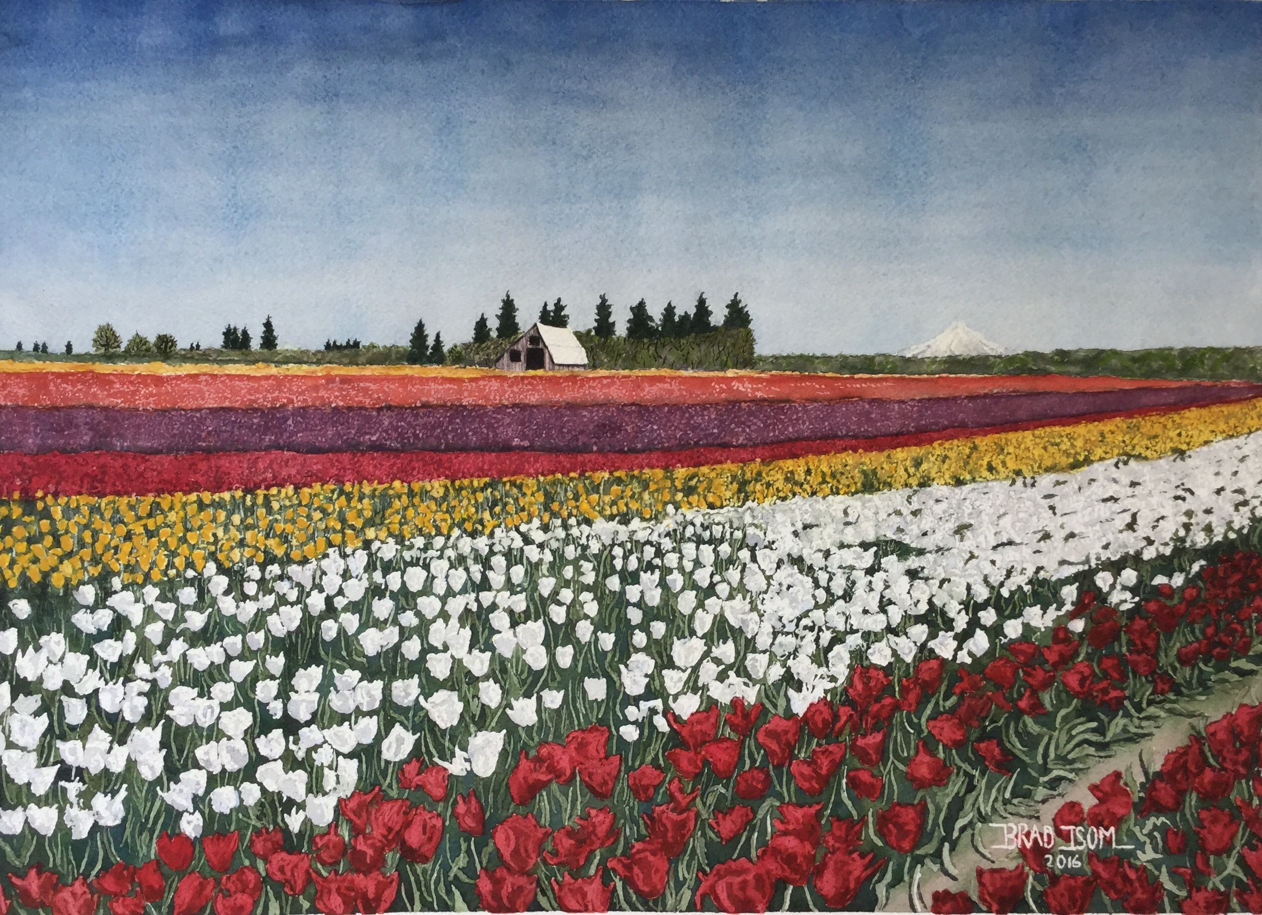 """Tulip Farm,"" by Brad Isom. (2016, watercolor)"