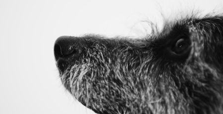 Close-up photograph of scruffy dog's face in profile, looking up as if at trainer.